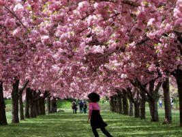 Portada La llegada de la Primavera en la cultura Japonesa
