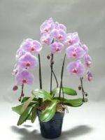 Logo Orquídeas