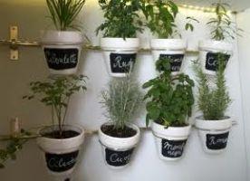 Logo Como curar las Plantas